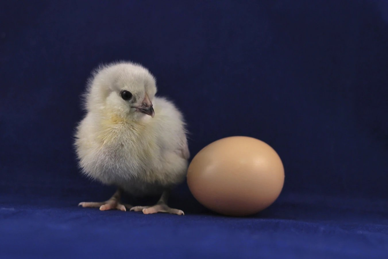 What to Do When the Eggs Don't Hatch